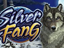 Как играть и выиграть джекпот в виртуальном слоте Silver Fang